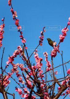 花の写真・画像素材[379560]