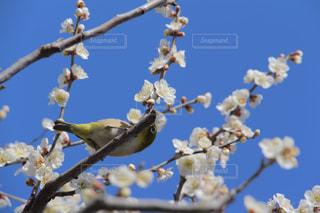 春の写真・画像素材[379565]