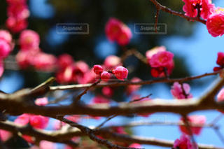 花の写真・画像素材[379642]