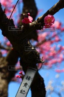 花の写真・画像素材[379643]
