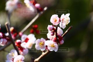 花の写真・画像素材[379744]