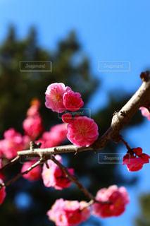 花の写真・画像素材[381533]