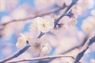 花の写真・画像素材[388592]