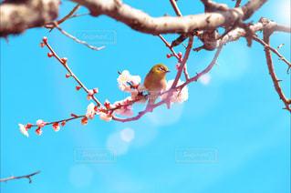 花の写真・画像素材[388593]