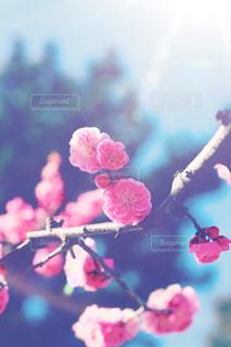 花の写真・画像素材[388594]