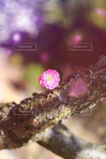 花の写真・画像素材[388595]