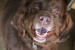 近くにカメラを見て犬のアップの写真・画像素材[938375]