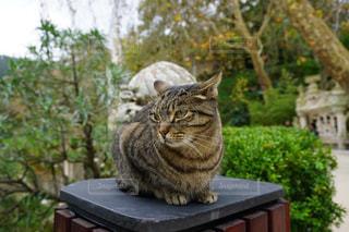 猫の写真・画像素材[365851]
