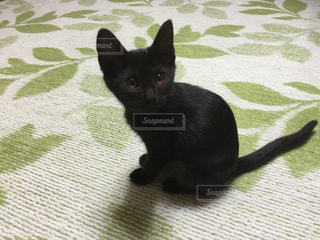 猫の写真・画像素材[366976]