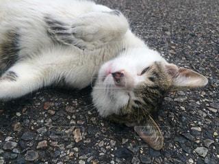猫の写真・画像素材[366062]
