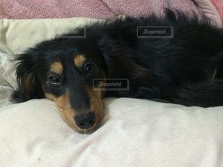 犬 - No.369561