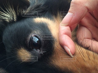 犬の写真・画像素材[369562]