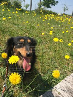 犬の写真・画像素材[369576]