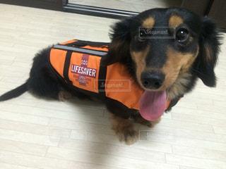 犬の写真・画像素材[369579]