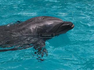 イルカの写真・画像素材[370960]