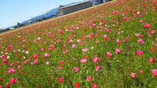 花の写真・画像素材[373842]