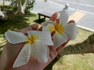 花の写真・画像素材[373844]