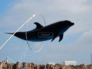 イルカの写真・画像素材[375181]
