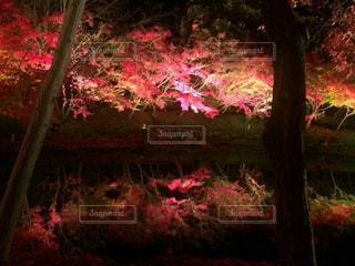 秋の写真・画像素材[395497]