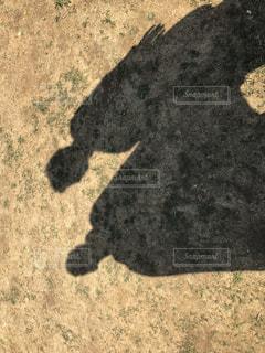 地面に横たわっている黒犬の写真・画像素材[1803868]