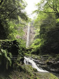 森の中の大きな滝の写真・画像素材[2173878]