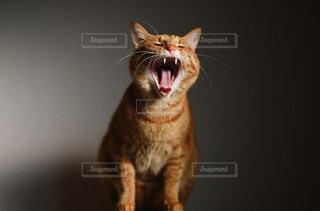 猫の写真・画像素材[367430]