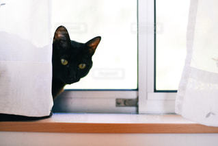 猫の写真・画像素材[367518]