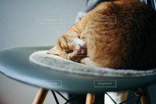 猫の写真・画像素材[367524]