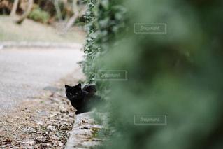 猫の写真・画像素材[373399]