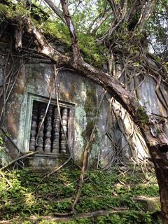森林の写真・画像素材[369914]