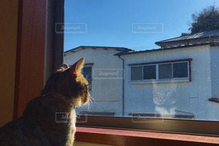 窓の前に座っている猫 - No.712977