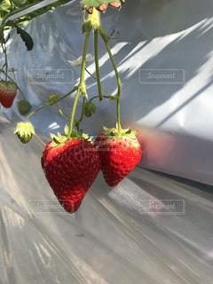 果物 - No.407607