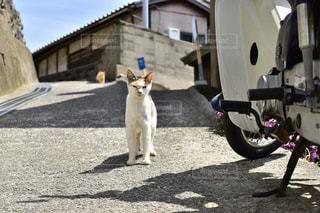 猫,動物,ねこ,香川県,ネコ,男木島