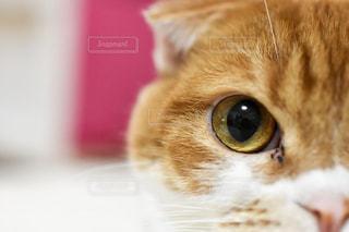 猫,ペット,アップ,目,接写