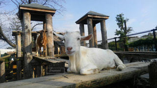 動物の写真・画像素材[369687]
