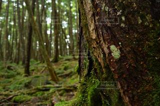 長野県の写真・画像素材[367613]