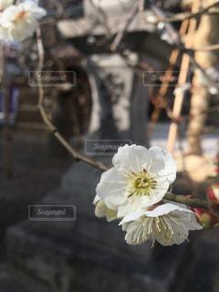 京都の写真・画像素材[367988]