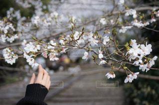 京都の写真・画像素材[395244]