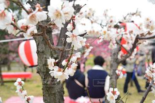 京都の写真・画像素材[397059]