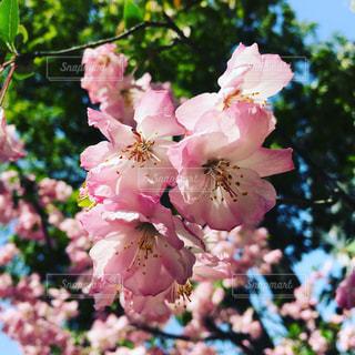 花の写真・画像素材[541223]