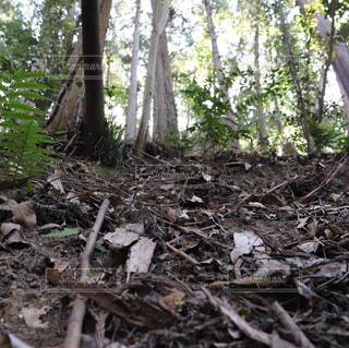 森の地面の写真・画像素材[2181775]