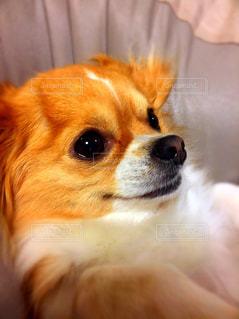 犬 - No.373778