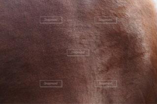 動物 - No.585171