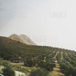 スペインのオリーブ畑の写真・画像素材[680356]