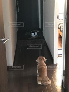 犬の写真・画像素材[368400]