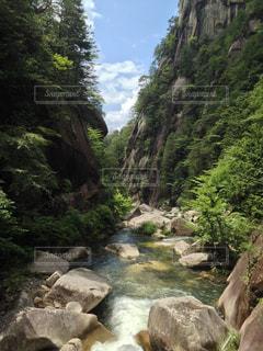 自然の写真・画像素材[368336]