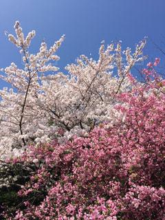 春の写真・画像素材[380373]