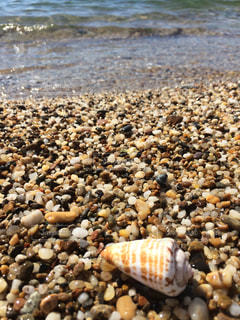 海の写真・画像素材[511583]
