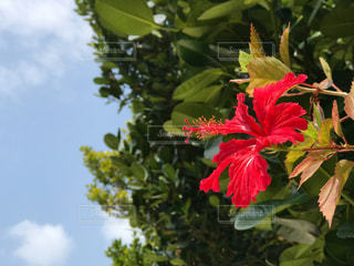 花の写真・画像素材[674087]