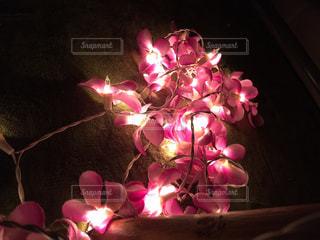 光、癒し、生活、睡眠の写真・画像素材[368622]